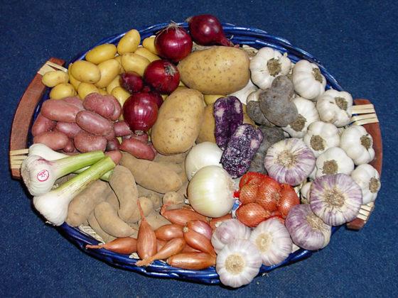 kartoffeln-zwiebeln